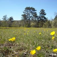Réserve Naturelle Régionale des Pelouses et bois de Villemoron © R. Leconte